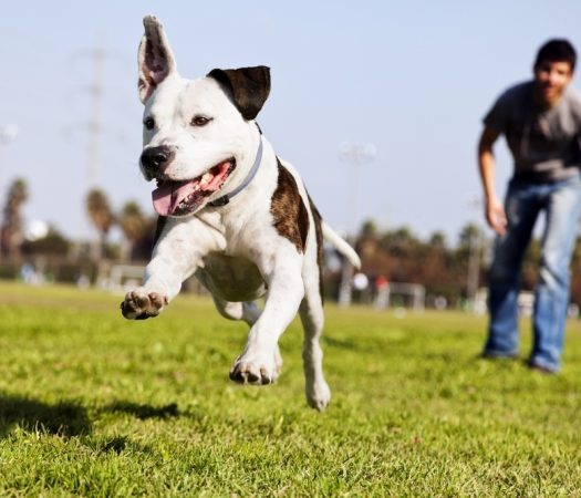 Is ther such a thing as a bad dog breed ? Overcoming breed discrimination.