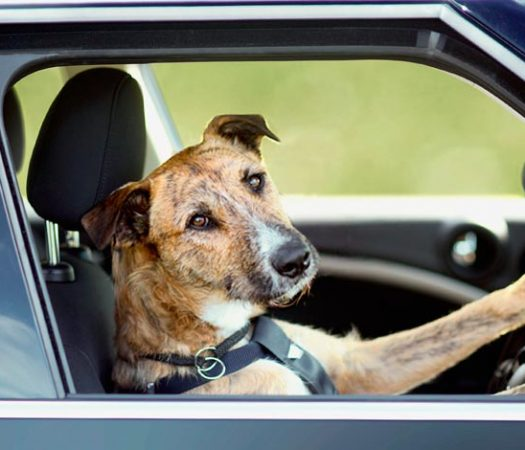 Traveling to Europe with your dog may sound like a hassle, but not so much if you go prepared.