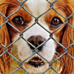 Adopting a Shelter Pet : Why You Should Adopt a Pet