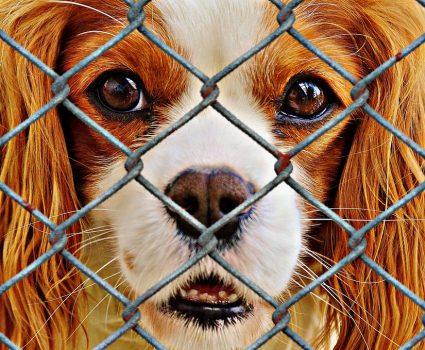 Adopting a Shelter Pet : Why You Should Adopt a Pet