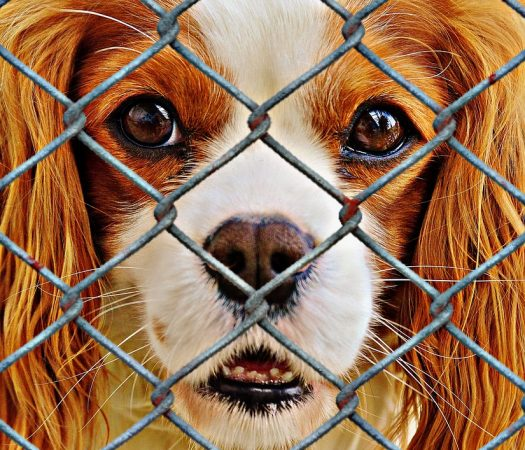 Adopting a Shelter Pet