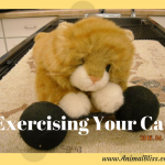 Exercising Your Cat: Tips and Tricks to Get Your Cat Moving