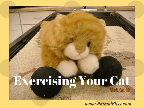 Exercising Your Cat: Some Tip and Tricks to Get Your Cat Moving