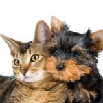 Diabetes in Cats and Dogs on the Rise