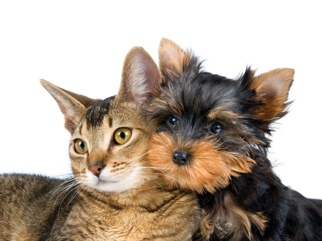 Diabetes in cats and dogs on the rise.