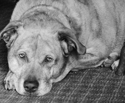 Helping Your Pets Live Long, Healthy Lives