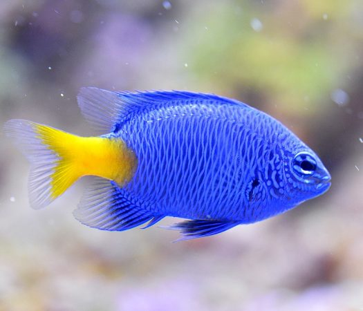 Getting Everything You Need to Start an Aquarium Hobby