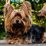 Things to Consider When Getting Dog Insurance