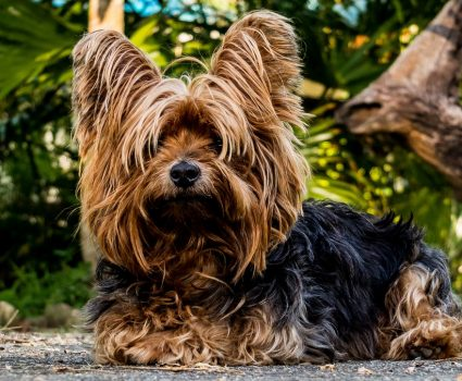 Crucial Components to Consider When Getting Dog Insurance