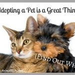 This is Why Adopting a Pet is a Great Thing