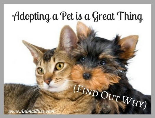 This is why adopting a pet is a great thing.