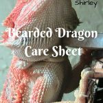 Bearded Dragon Care Sheet: Everything you Need to Know