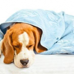 How to Help Dogs with Gastritis