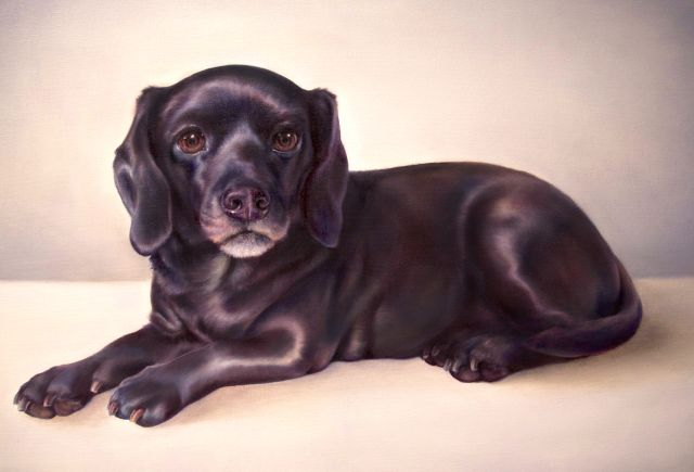 Kate Crosgrove, Pet Portrait Artist