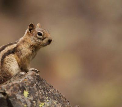 4 Tips to Turn Your Backyard into a Wildlife-Friendly Habitat