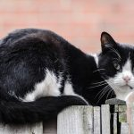 How to Pet-Proof Your Garden – Safe Gardening with Pets