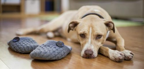 Does your Dog Deserve a Second Chance if He has Bitten you Once?