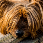 6 Tips for Keeping a Well Behaved Dog, Dog Training Ideas