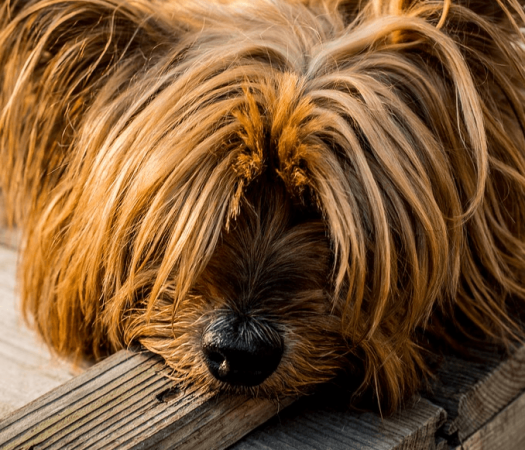 6 Tips for Keeping a Well Behaved Dog
