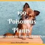 199 Poisonous Plants That are a Danger to You and Your Pets