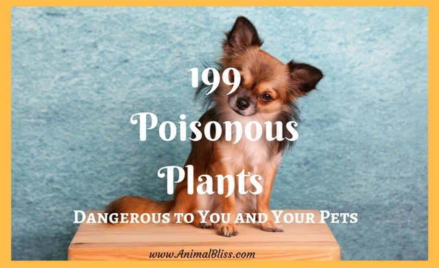 199 poisonous plants that are a danger to you and your pets.
