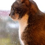 Storm Preparedness for Pets – Are You Ready?