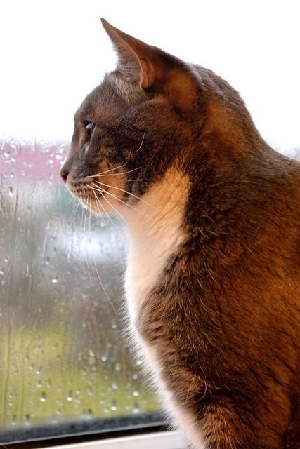 Storm preparedness for pets - Are You Ready?