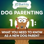 Dog Parenting 101 – Everything You Need to Know