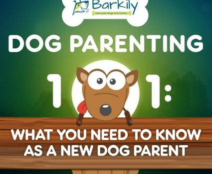 Dog Parenting 101 - Everything You Need to Know - an Infographic