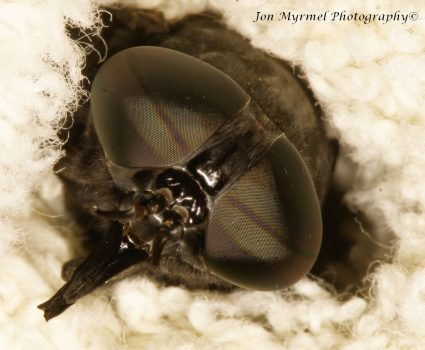 There's a Huge Horse Fly at My Door – Yikes!