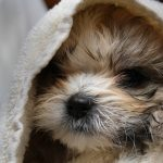 Can You Use Human Shampoo on Dogs Regularly?