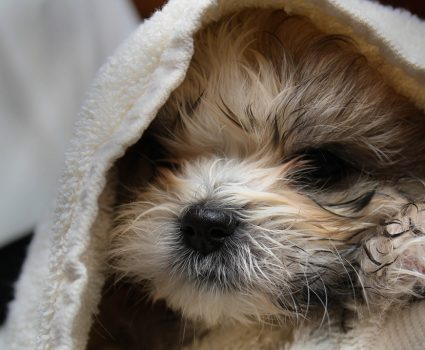 Is it safe to use human shampoo on dogs?