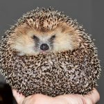 7 Exotic Pets to Consider if You Want an Unusual Pet