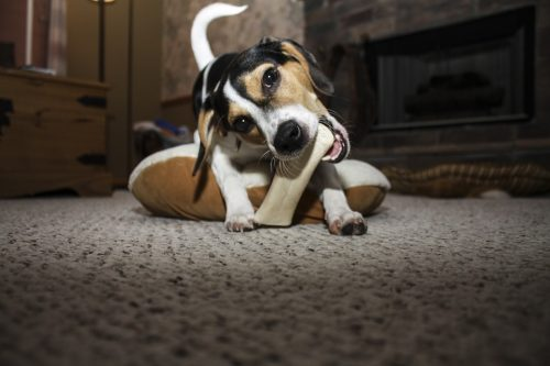 Training a New Dog: How Can the Kids Help?