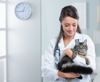 5 Degrees for Animal Lovers : Animal Careers