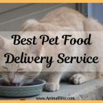 Choosing the Best Pet Food Delivery Service