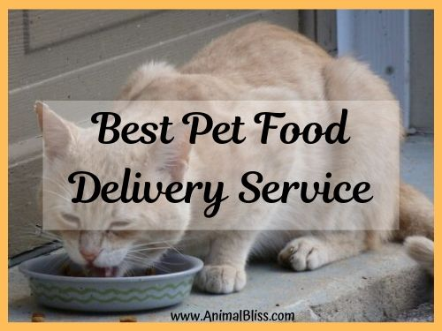 Best Pet Food Delivery Service: Which is it?