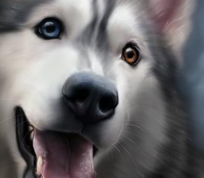 Cameo Anderson : Pet Portrait Artist, Illustrator