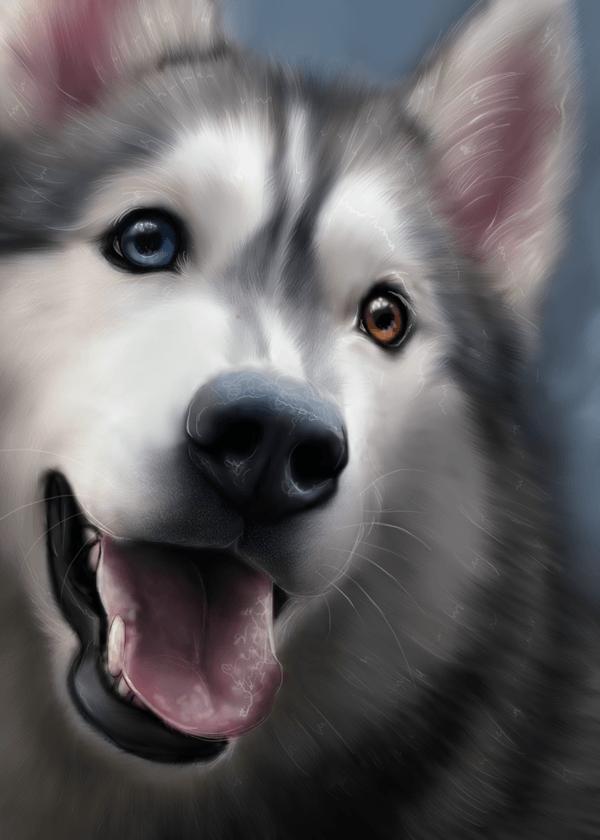 Cameo Anderson, Pet Portrait Artist