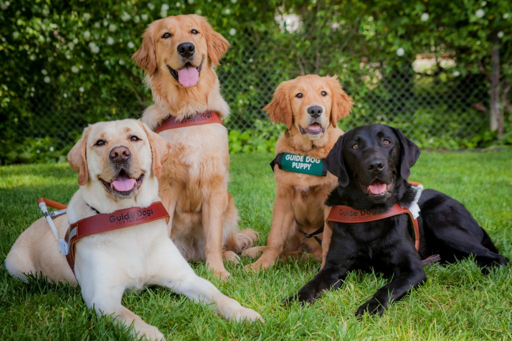 September is National Guide Dog Month - a chance to celebrate and spread awareness about an amazing bond between people who are blind and their guide dogs.