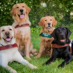 We're Celebrating National Guide Dog Month