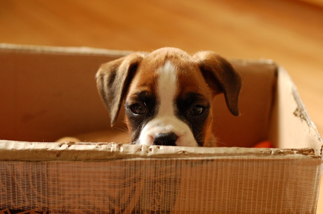 Here is an ultimate guide to moving with pets to help alleviate the stress and confusion moving inflicts on our furry friends. Click here.