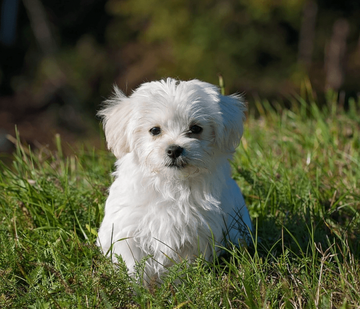 5 Tips For Making Dog Training Easy As Possible