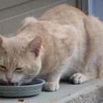 Tips For Choosing the Best Pet Food Delivery Service