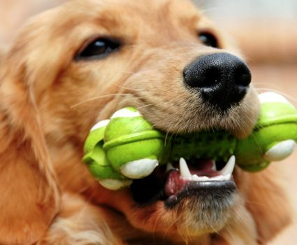 Famous American Pet Toy Inventions Through History