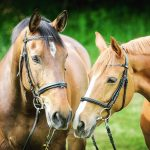 Choosing the Right Feed for Your Horse