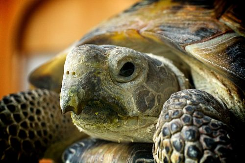 14 Things About Russian Tortoises You Didn't Know