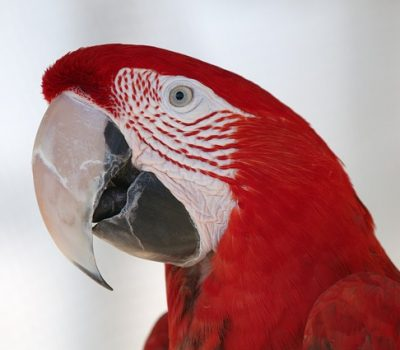 10 Major Things to Consider Before Getting a Macaw