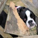 Puppy Mill Awareness Day : September 19