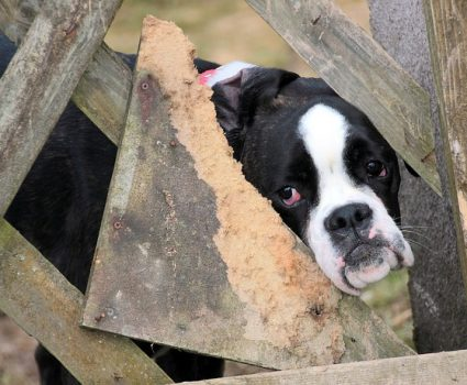 Puppy Mill Awareness Day September 19 is meant to spread awareness of the awful truth behind the puppy mill industry.